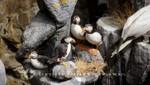 Nordkapphallen - Diorama eines Vogelfelsens