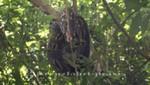 Madagaskar - Nosy Be - Noch eine Boa im Lokobe Reservat