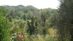 Olympias liebliche Umgebung
