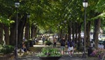 Alley of trees running next to Karl Johans Gate