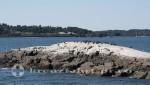 Portland - Pomroy Rock