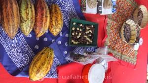 Espíritu Santo Kooperative - Kakaofrüchte