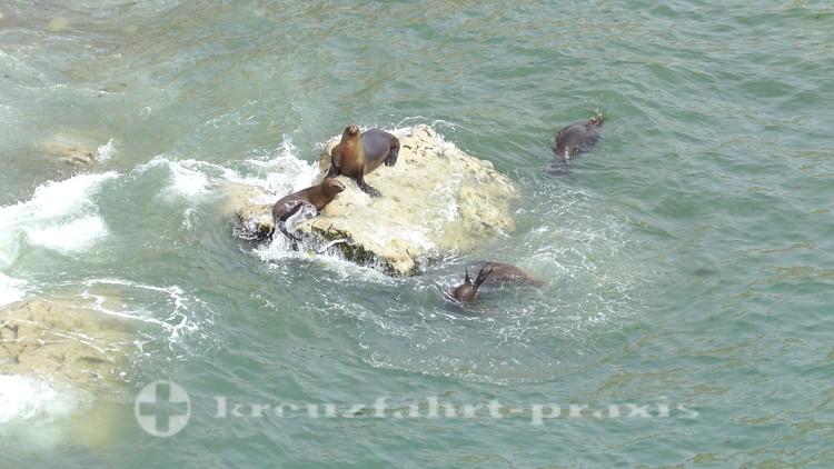 Seelöwen-Kolonie bei Puerto Madryn