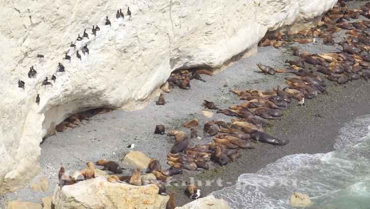 Die Seelöwen von Punta Loma
