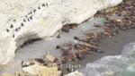 Seelöwen und Magellan-Kormorane