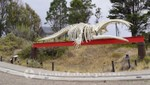 EcoCentro von Madryn - Skelett eines Südkaper Wals