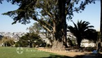 Alamo Square Park