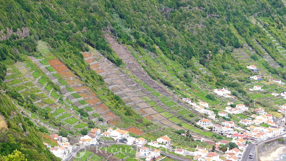 Santa Maria - Vineyards - Baia de São Lourenco