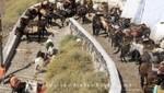 Santorin - Fira - Esel auf Treppen