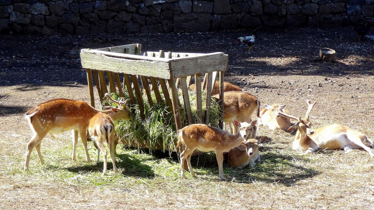 Parque Florestal das Sete Fontes - game reserve