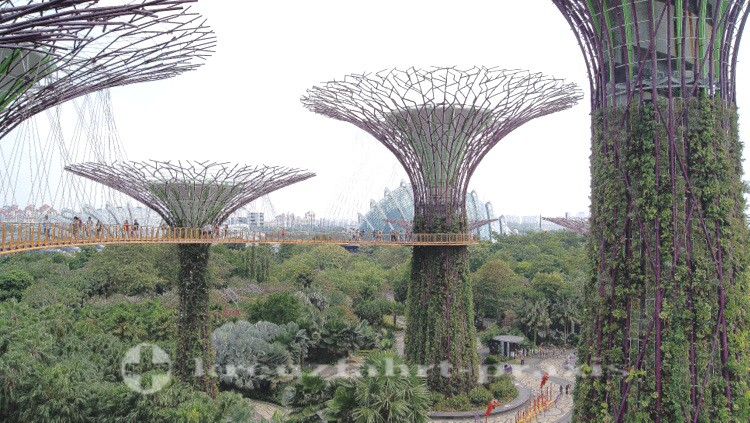 Supertree Grove und Skywalk