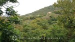 St. Kitts - Wingfield Estate - Blick ins Tal