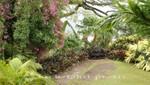St. Kitts - Romney Manor - Parkanlage