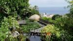 Teneriffa - Puerto de La Cruz -Botanischer Garten