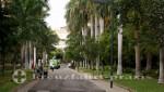 Teneriffa - Eine Palmenallee
