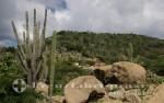 Aruba - Trockenes Land