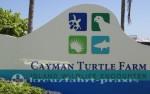 Grand Cayman - Schildkrötenfarm