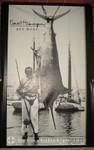 Key West - Der Fischetöter