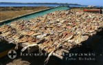 Puerto Corinto - Stockfisch