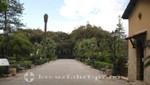 Trapani - Parkanlage Villa Comunale - Palmenallee