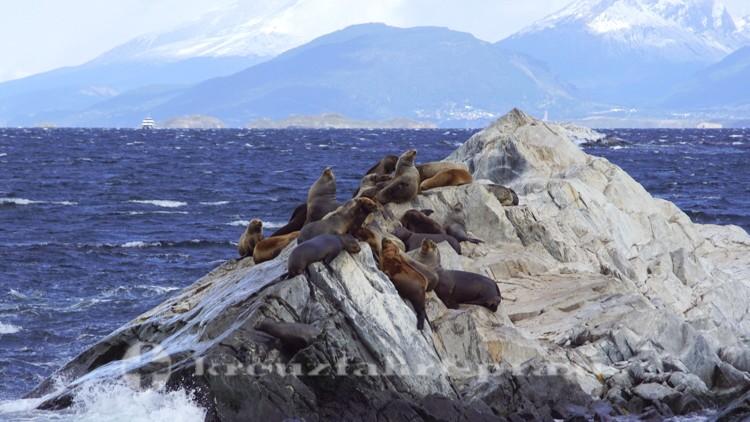 Seelöwen auf der Isla de los Lobos