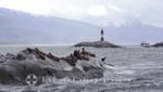 Der Les Eclaireurs-Leuchtturm - davor Seelöwen