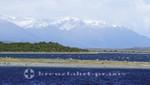 Isla Martillo - Magellan-Pinguin-Kolonie