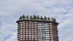 Bäume auf dem Woodward's Building