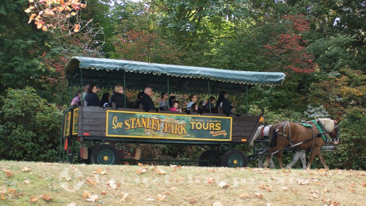 Pferdekutsche im Stanley Park