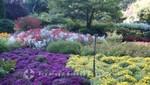 Herbstblumen in den Butchart Gardens