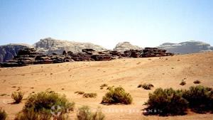 Sträucher in der Wüste