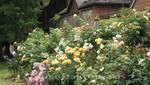 Winchester - Englands Blütenpracht